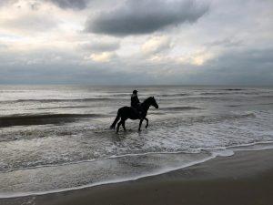 Paardenrit over het strand bij Heemskerk