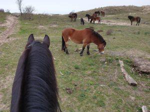 Paardenrit door de duinen Heemskerk