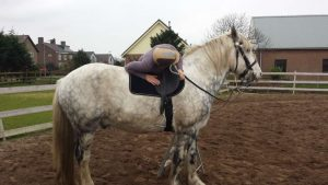Paarden training bestijgen vervolg
