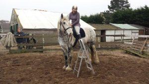 Paarden training bestijgen
