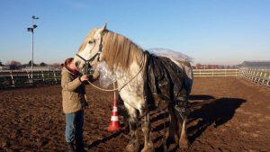 Paarden training in Maaike van der Eng