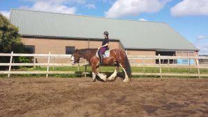 Paarden training een op een