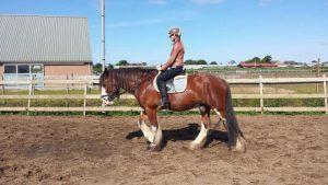 Paarden training in de bak